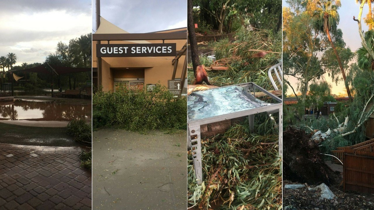 The Phoenix Zoo had to close its doors due to the monsoon storm damage caused on Thursday. (Source: Phoenix Zoo)