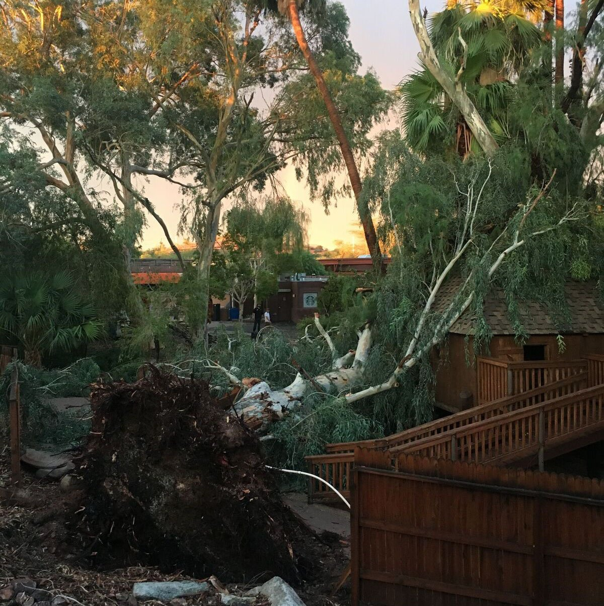 The Phoenix Zoo reported several downed trees, muddy walkways and flooding from the storm. (Source: Phoenix Zoo)