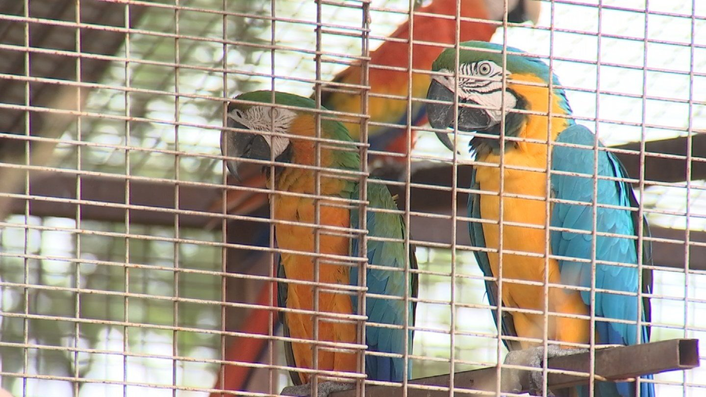 The bottom line is they do a little bit of every thing. You can buy stuff for your yard, they offer landscaping services and they even rescue birds. (Source: 3TV/CBS 5)