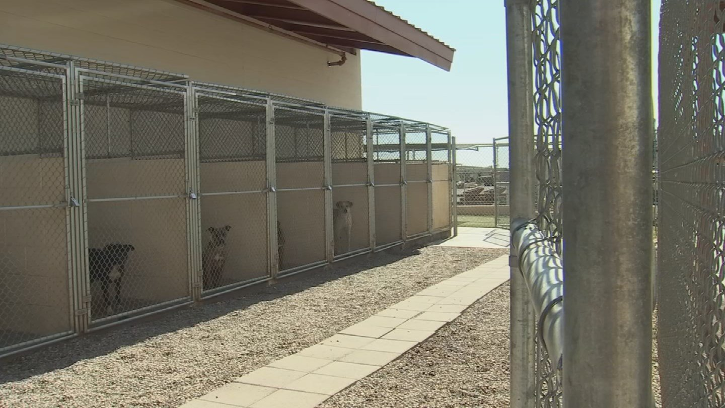 Glendale has become the first city in the Valley to enact an animal cruelty ordinance, in close partnership with the Arizona Humane Society. (Source: 3TV/CBS 5)