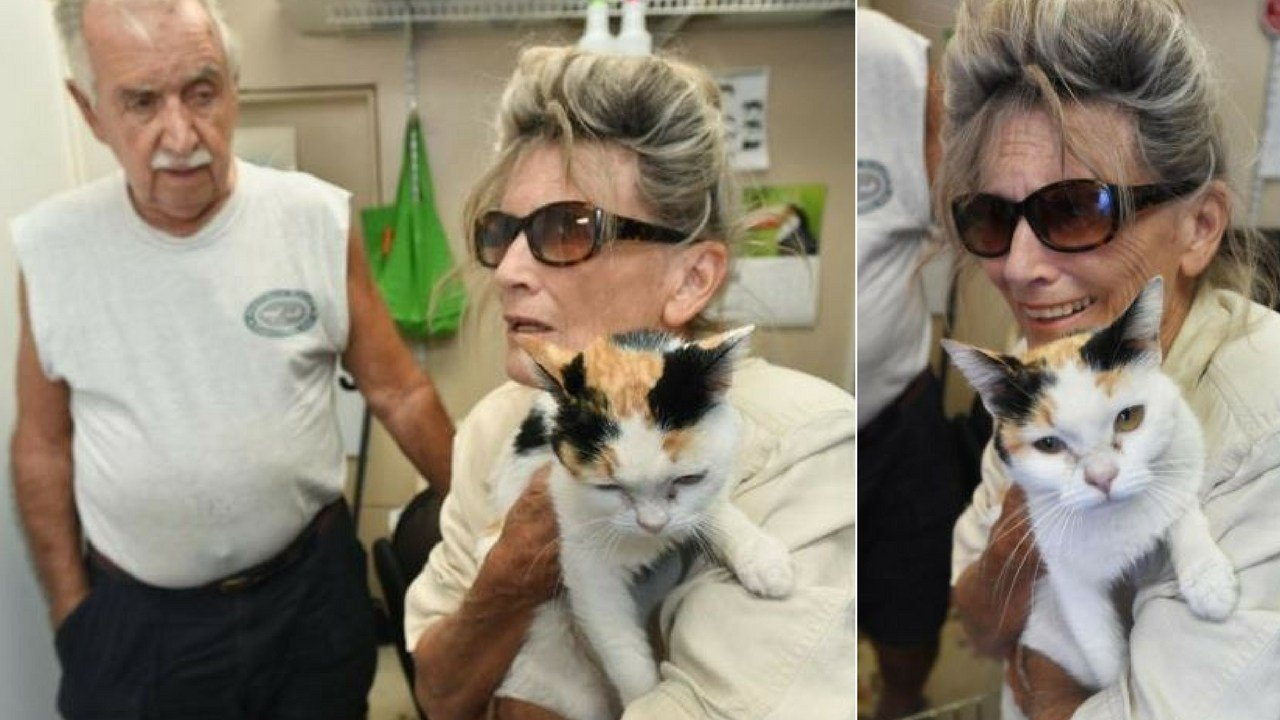 A New Jersey cat's Florida adventure lasted 46 days after Steve Kreuger, from Bullhead, Arizona, and Ana Fontana stopped at a restaurant in Florida, where Trotsy the cat bolted. (Source: nwfdailynews.com)