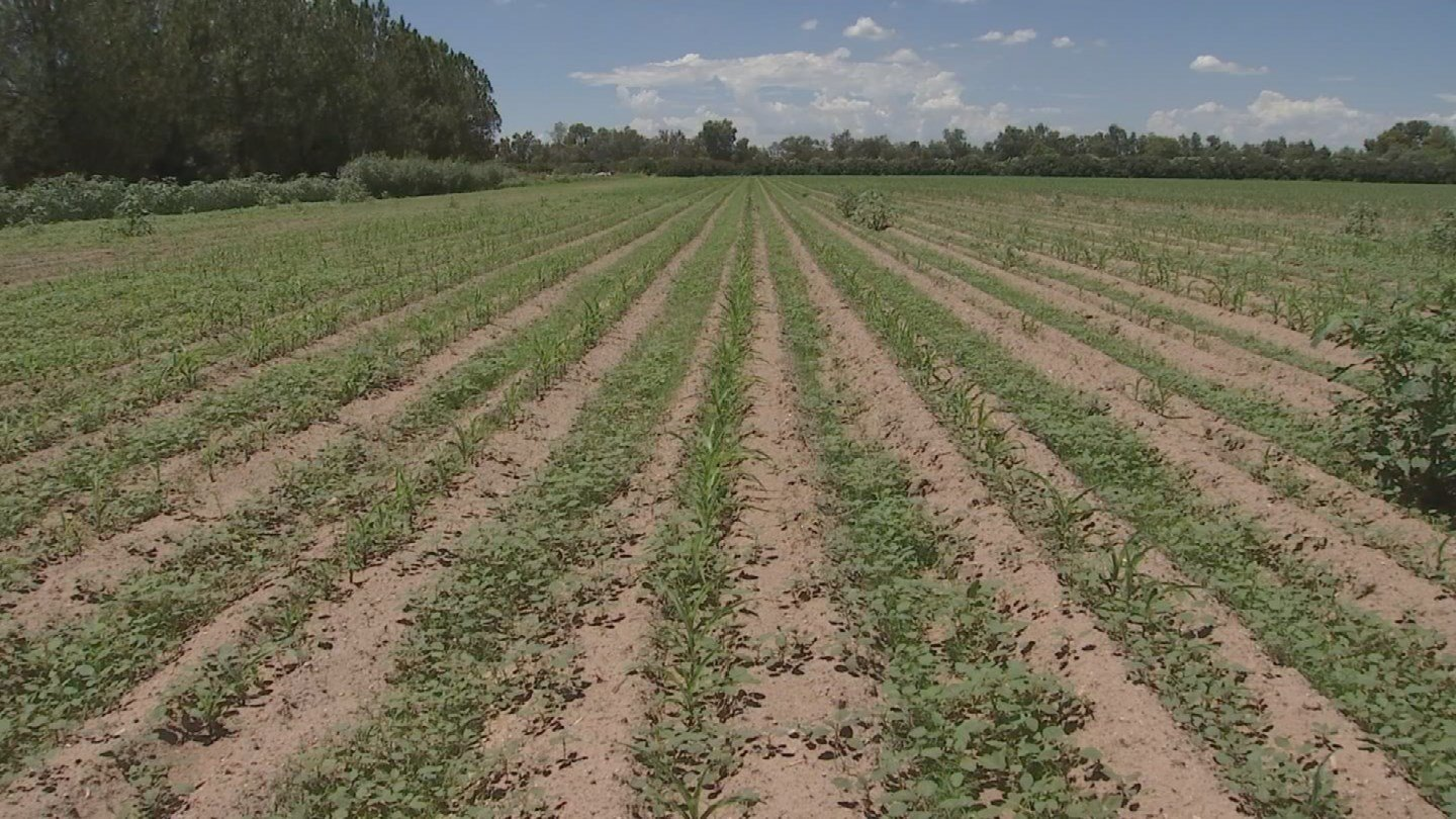 As they add new things, they're also working on annual favorites like the corn maze. This year's corn is already planted on one of the farm's 10-acre fields. (Source: 3TV/CBS 5)