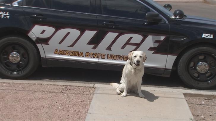 The 9-year-old yellow Labrador retriever named Disney is retiring. (Source: 3TV/CBS 5)