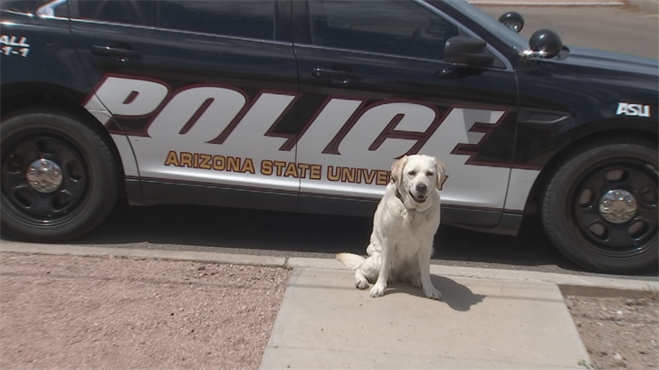 The 9-year-old yellow Labrador retriever named Disney is retiring. (Source: 3TV/CBS 5)