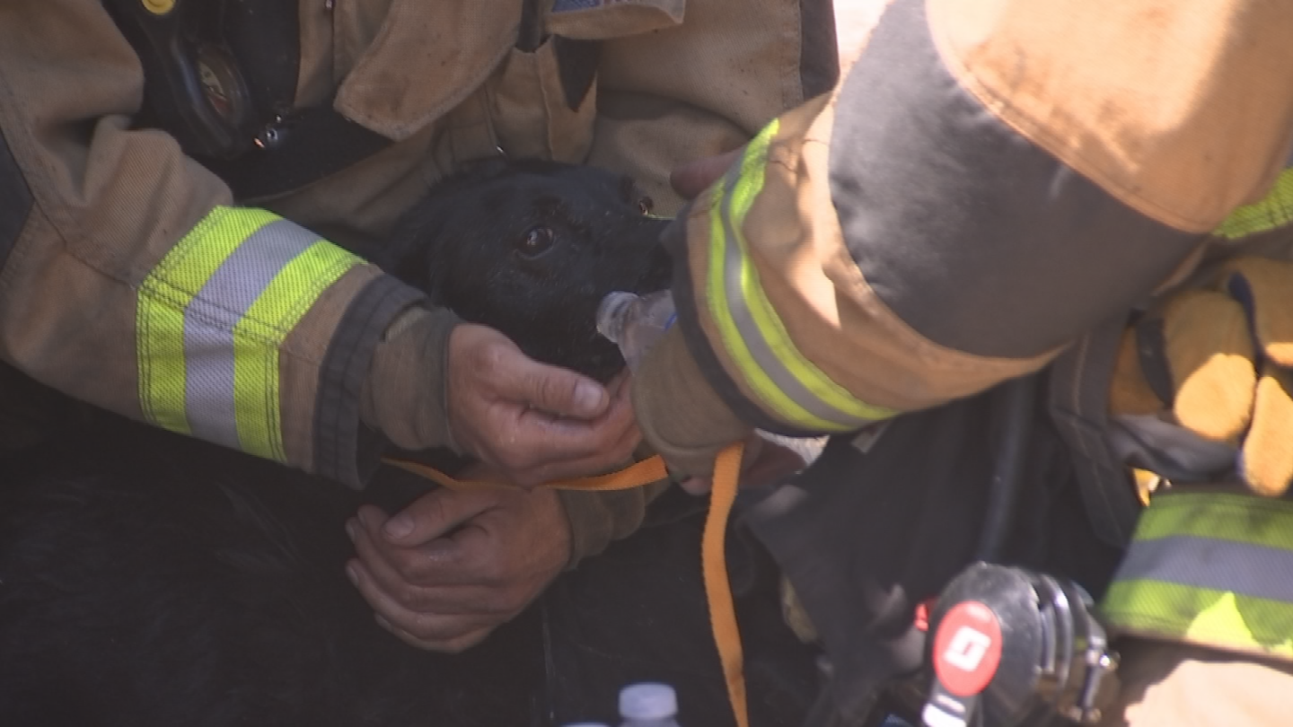 The dog is now doing OK and was given some water. (Source: 3TV/CBS 5)
