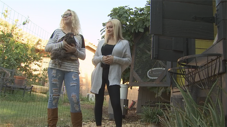 "In north Phoenix, two teens Willow Aldridge and Athena Poge have started a company called ""Two Blonde Chicks."" They raise chickens, quails and guinea fowls. (Source: 3TV/CBS 5)"