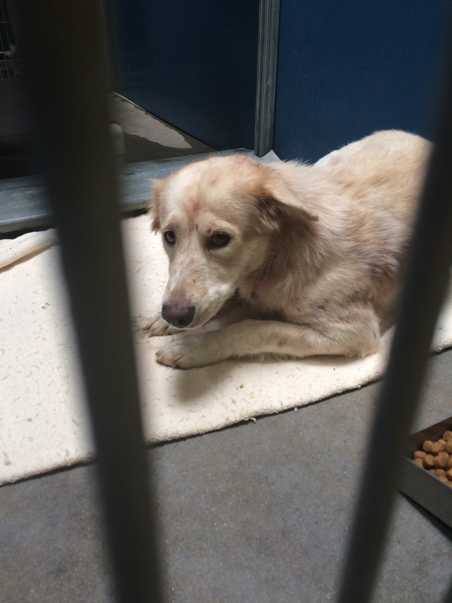The four Shepherd mixes are in the custody of MCACC under a bite quarantine. (Source: 3TV/CBS 5)