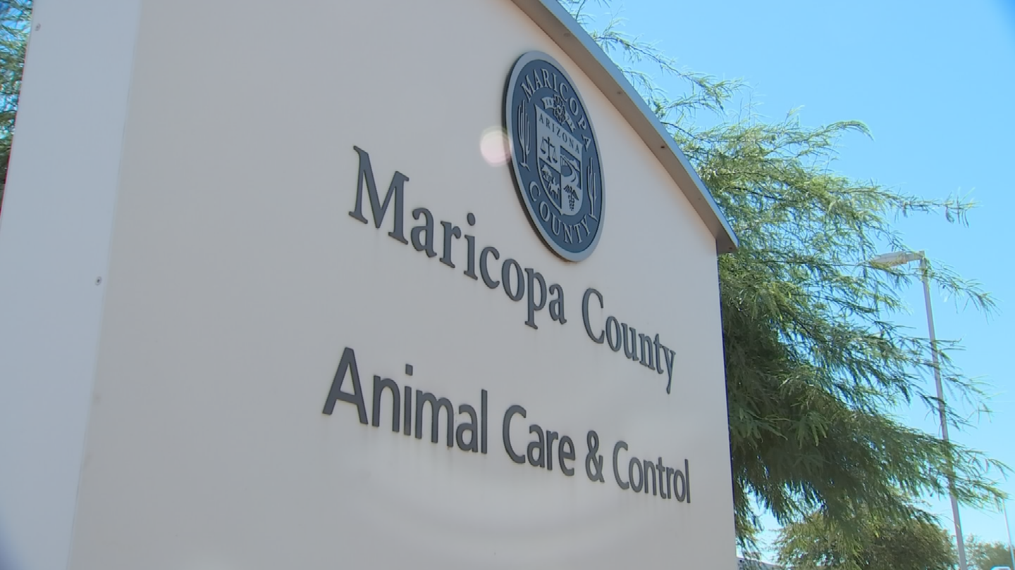 Maricopa County Animal Care and Control said it might file a motion for the dogs to declare vicious. (Source: 3TV/CBS 5)