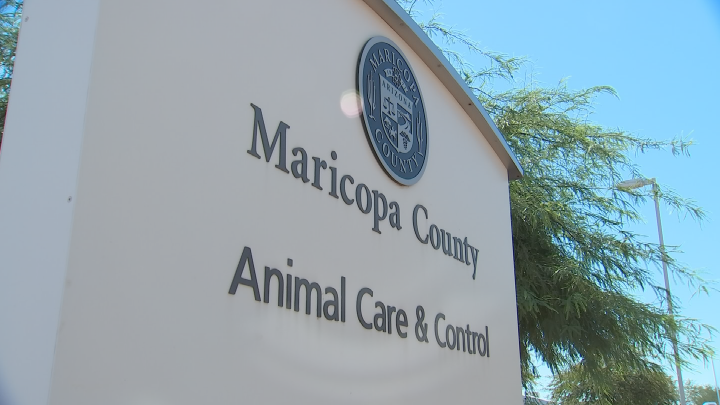 MCACC said it's in process of filing documents to have the two surviving dogs declared vicious. (Source: 3TV/CBS 5)