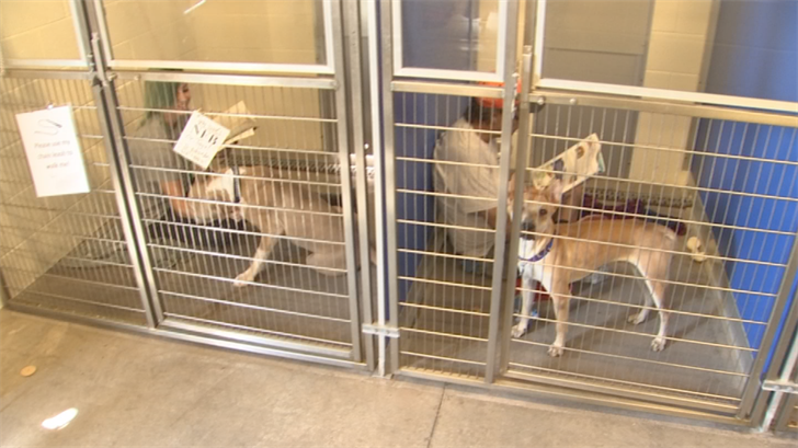 Reading to shy dogs helps them socialize, AAWL said. (Source: 3TV/CBS 5)