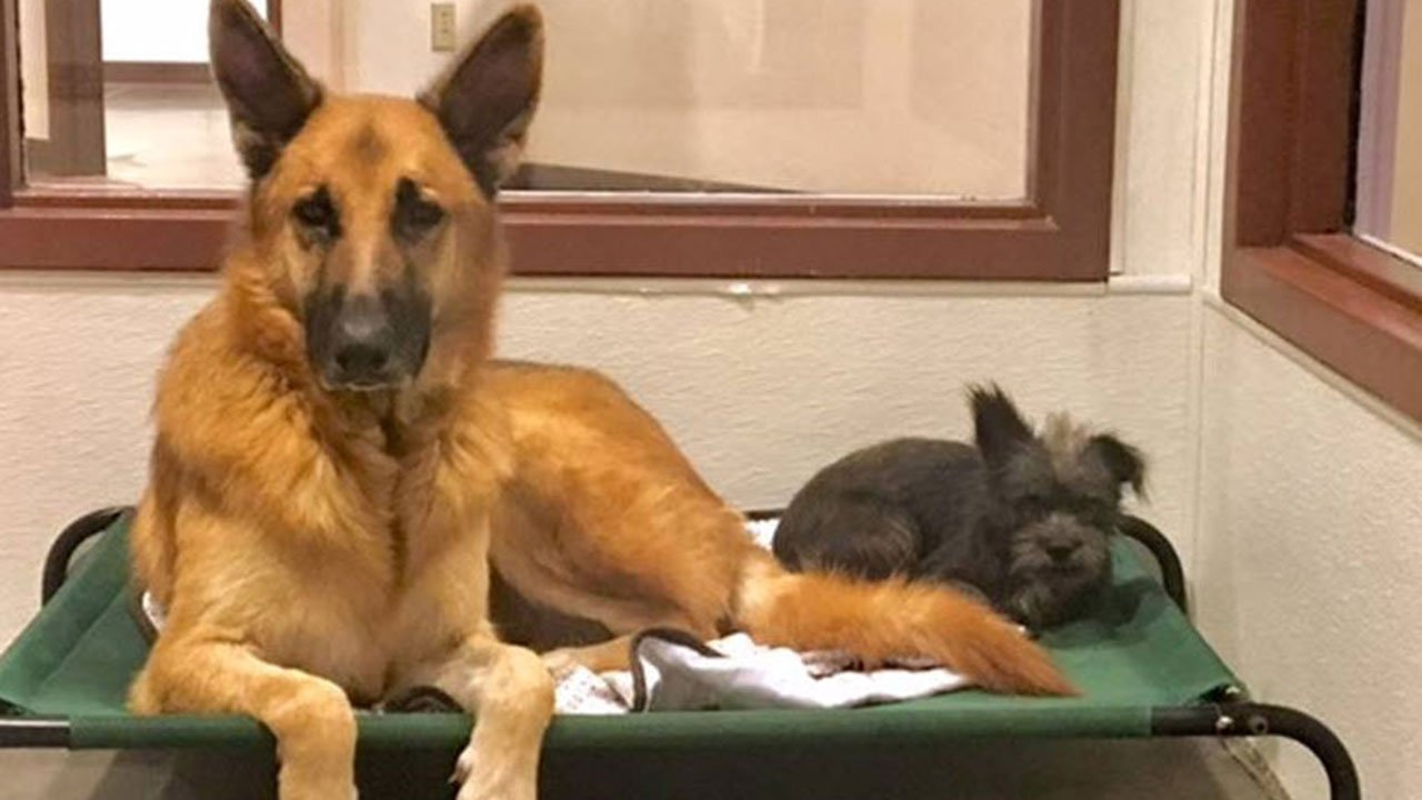 (Source: Maricopa County Animal Care and Control)