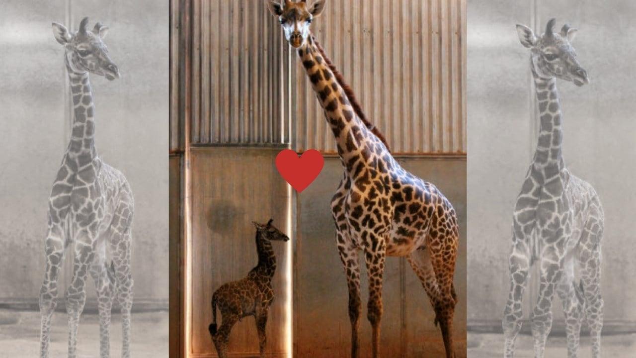 (Source: The Phoenix Zoo)
