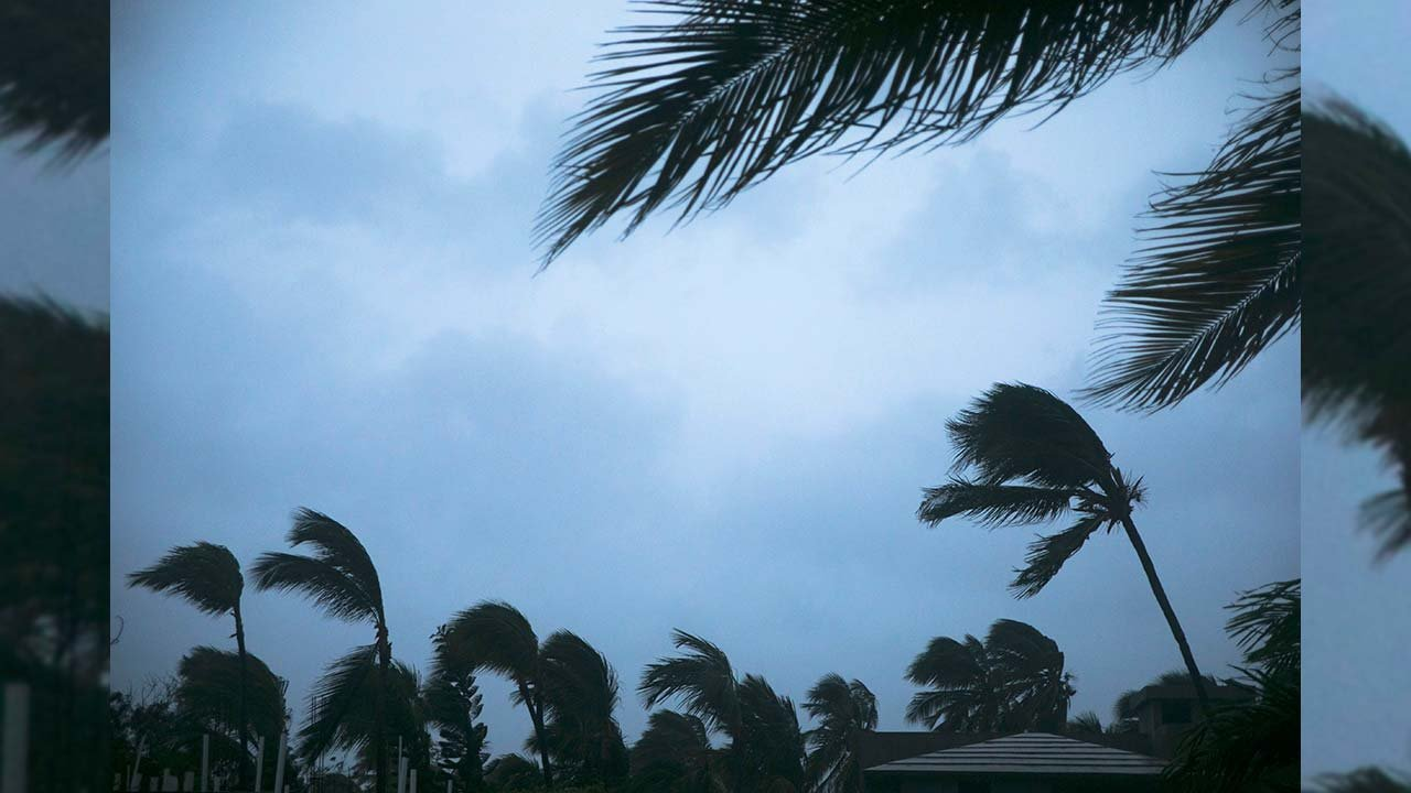 Wind shakes palm trees as Hurricane Maria approaches the coast of Bavaro, Dominican Republic, Wednesday, Sept. 20, 2017. (Source: AP Photo/Tatiana Fernandez)