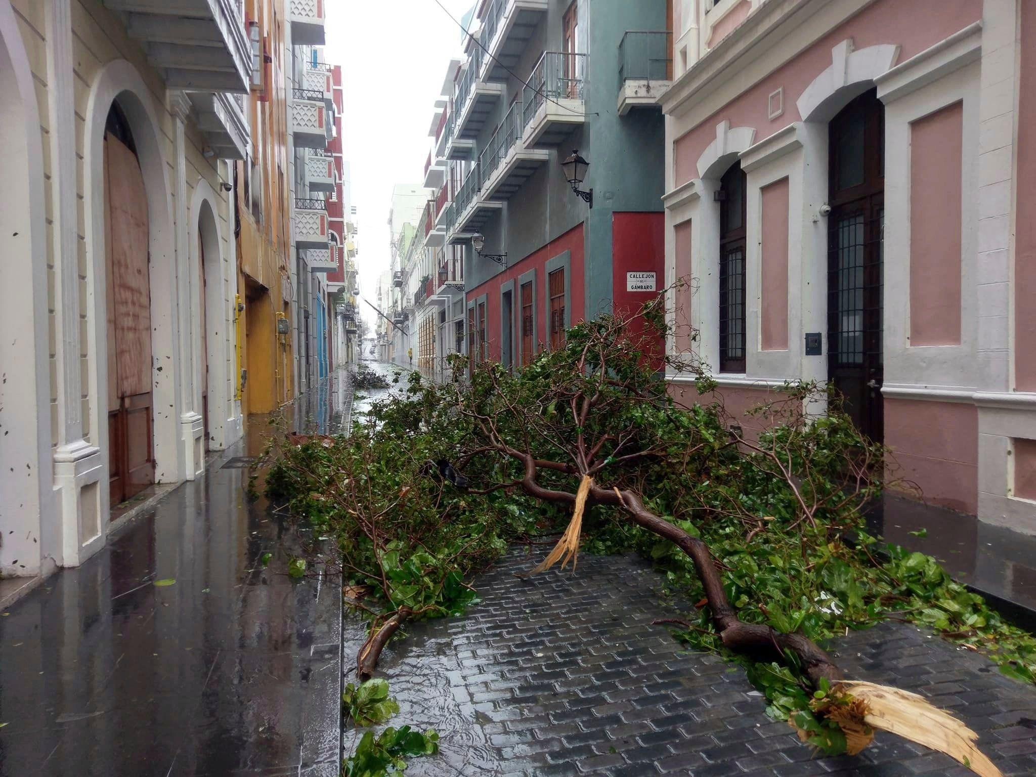 In this photo provided by Jason Heskew, a downed tree blocks a street during Hurricane Maria in Old San Juan, Puerto Rico, Wednesday, Sept. 20, 2017. (Source: Jason Heskew via AP)
