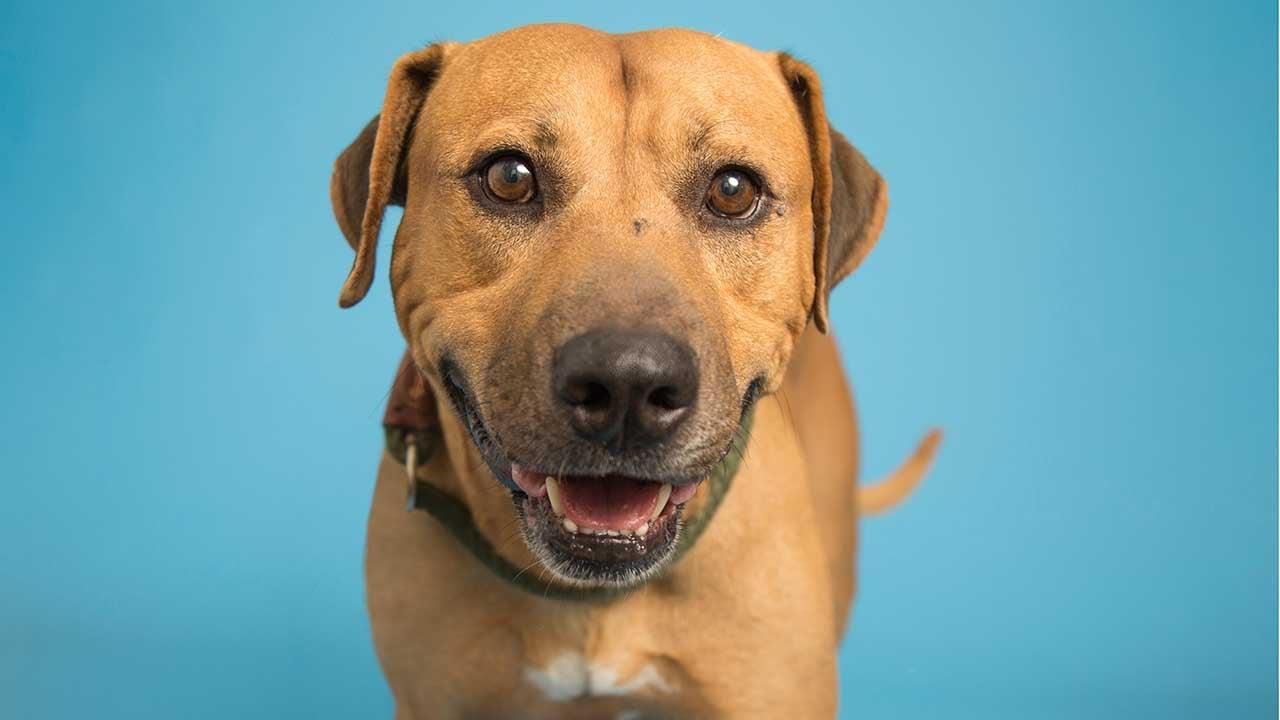 Clifford (Source: Arizona Humane Society)