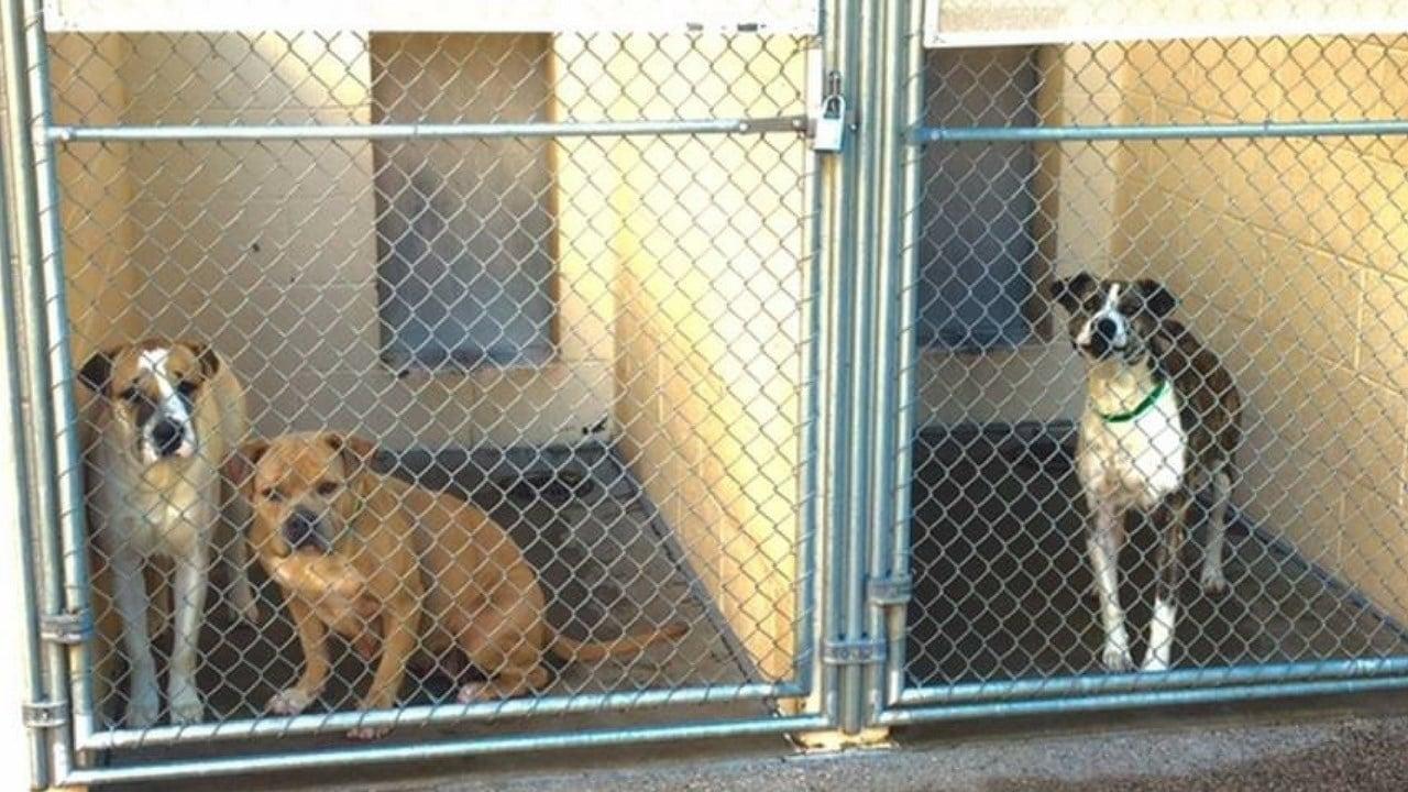(Source: Maricopa County Animal Care & Control)