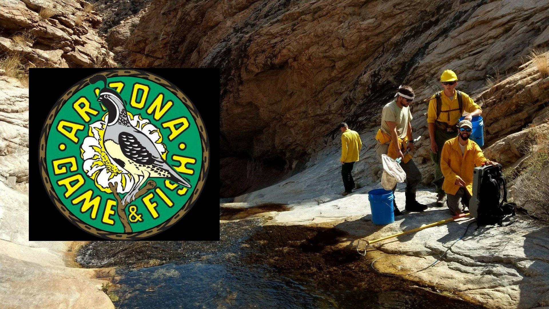 Fishing in the the Frye Creek has been suspended to allow population regrowth among Gila trout. (Source: Arizona Game and Fish Department)