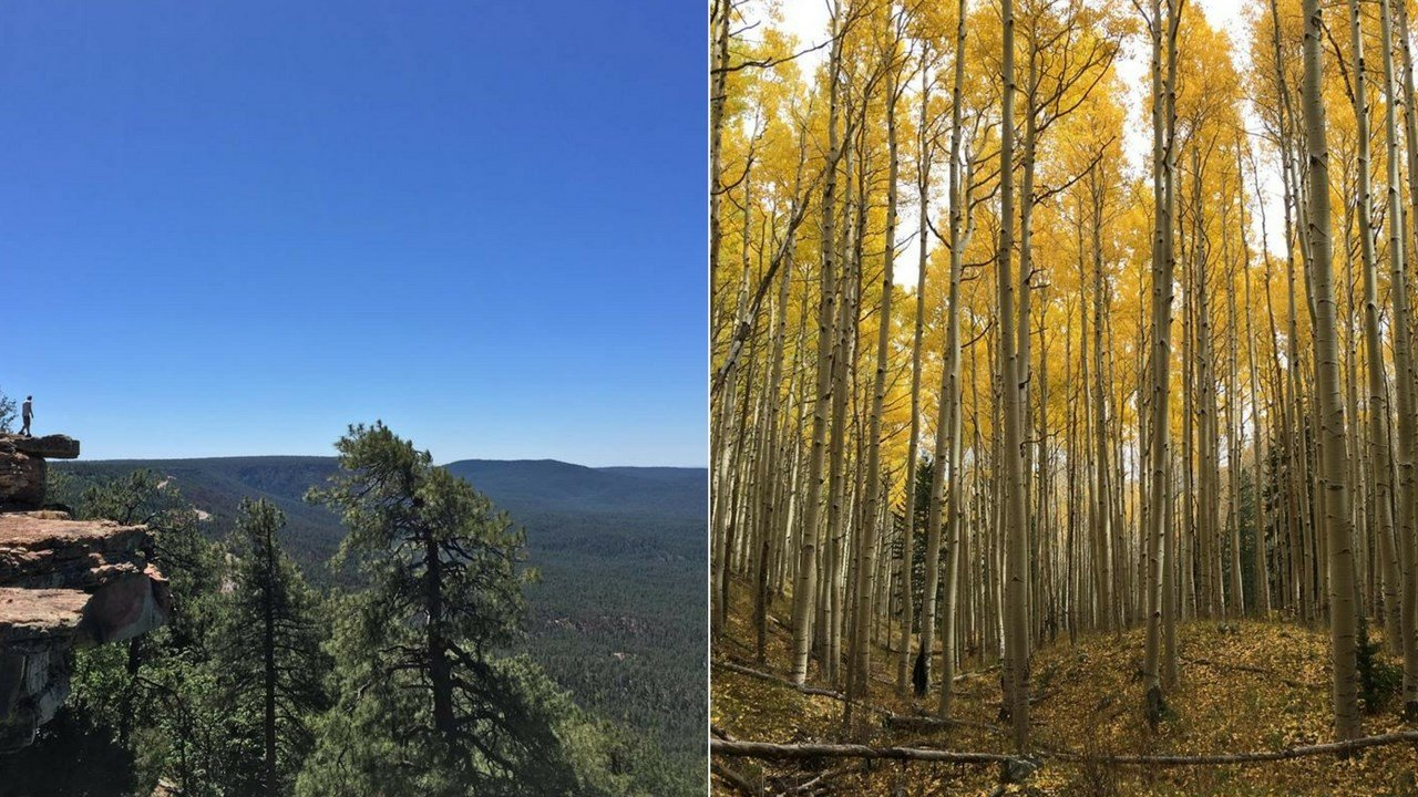 I try to get out as much as I can to see all the beauty our great state has to offer.   But I feel there is a small window that is the best time to get out and hit the trails, and that time is now! (Source: 3TV/CBS 5)