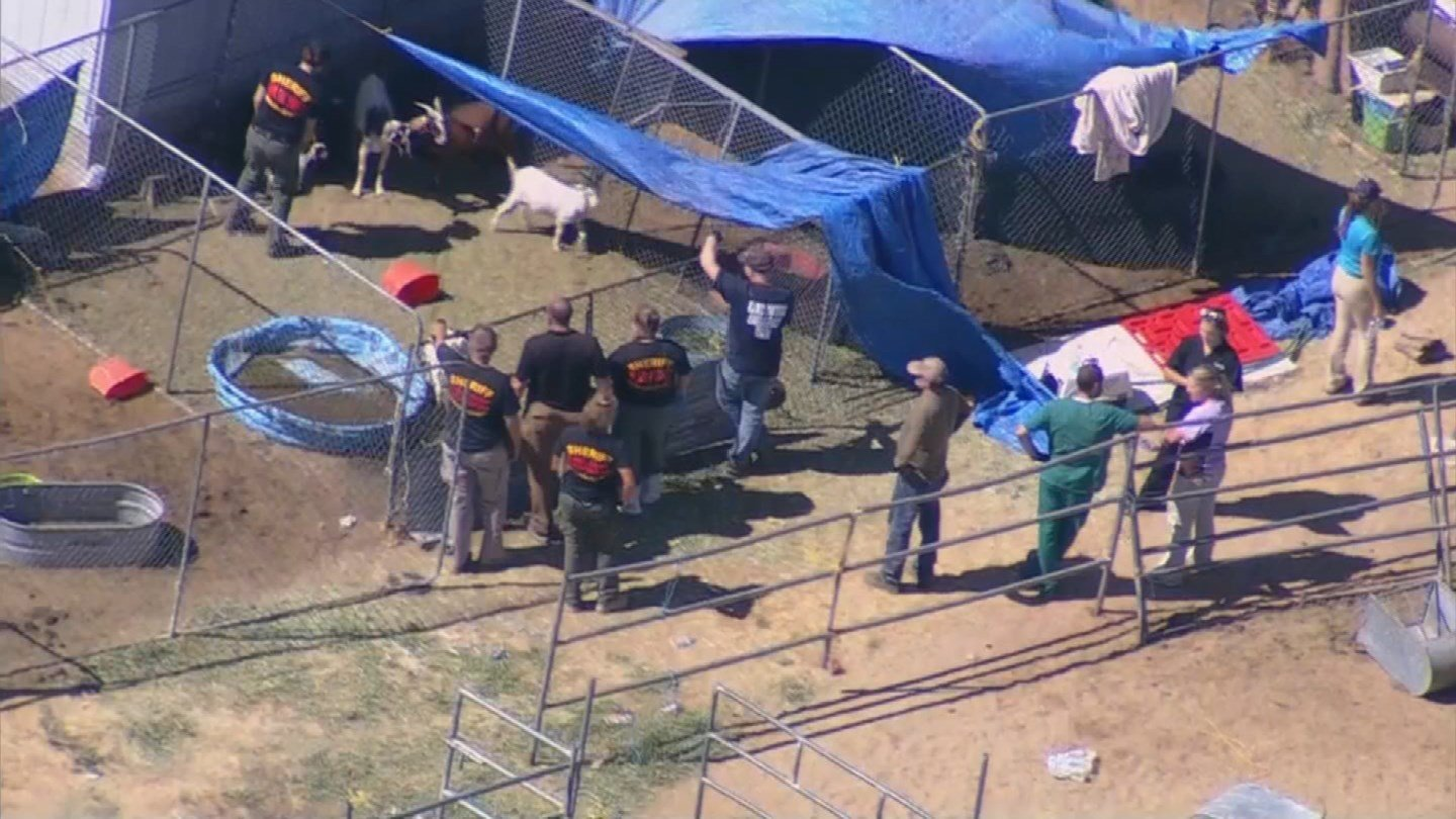 MCSO officials investigate reported animal abuse in Buckeye. (Source: 3TV/CBS 5 News)