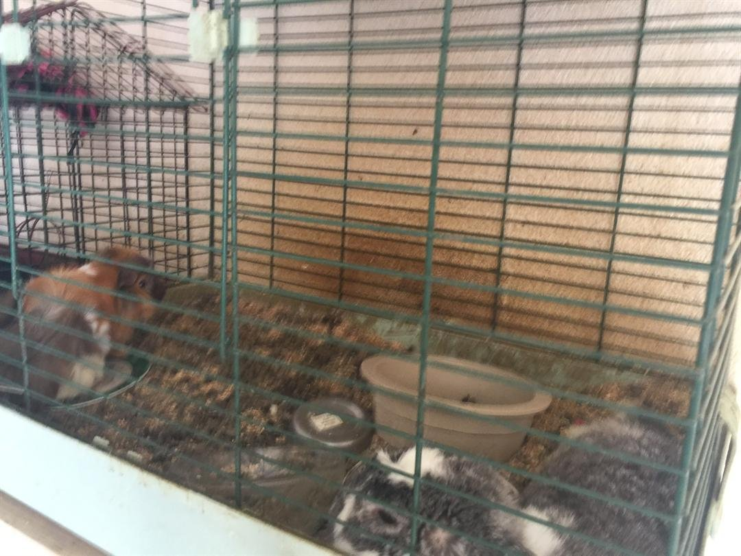 Animals removed from a Buckeye home Monday. (Source: Maricopa County Sheriff Dept.)