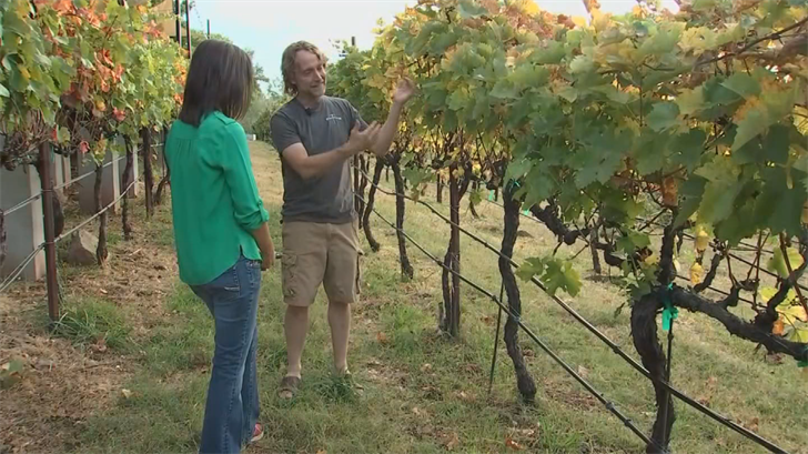Before opening his estate vineyard, Glomski learned winemaking in Sonoma County. (Source: 3TV/CBS 5)