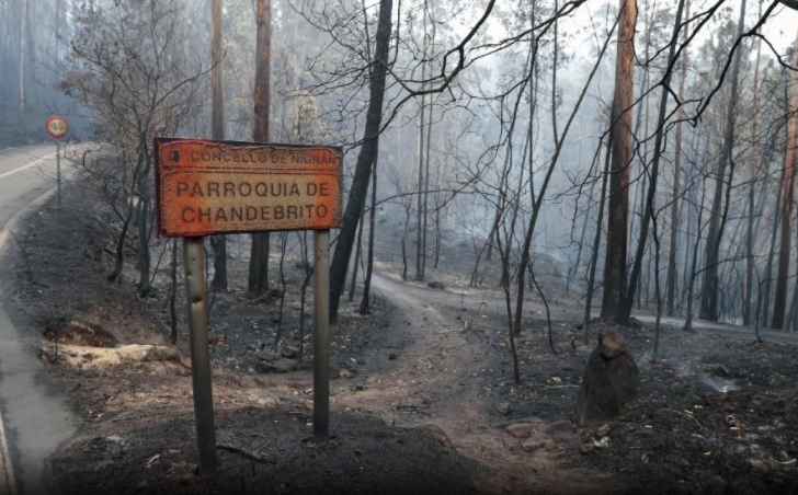 What's left of a torched forest in northern Spain (AP)