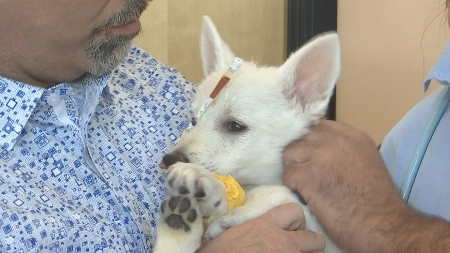 """""""BB Bear,"""" is making an astonishing recovery after being abused. (Source: 3TV/CBS 5)"""