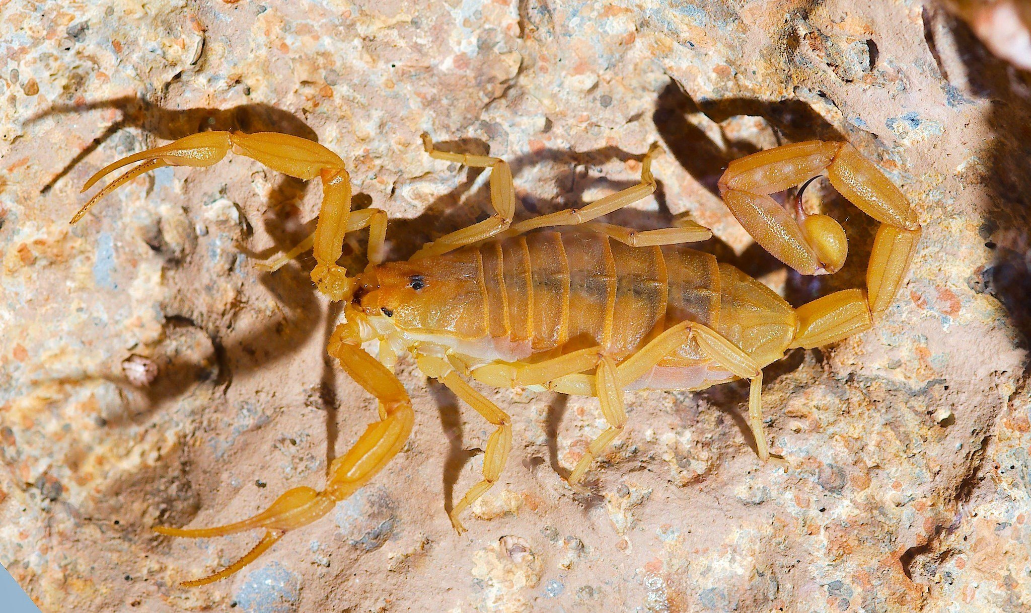 It's the time of year for scorpions and their other creepy friends to come out and play.