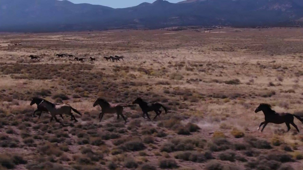 Wild horses in Utah (Source: CBS News)
