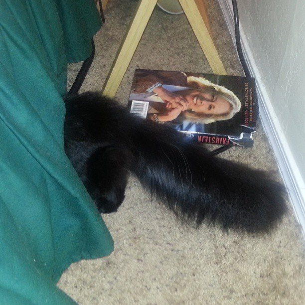 Feline hiding fail. Not always a ninja. (Source: Catherine Holland, 3TV/CBS 5)