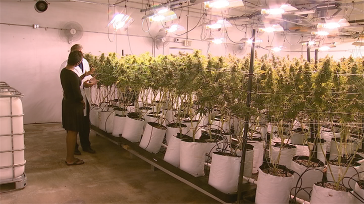 They make their plants on site, with special nutrient enriched soil. (Source: 3TV/CBS 5)