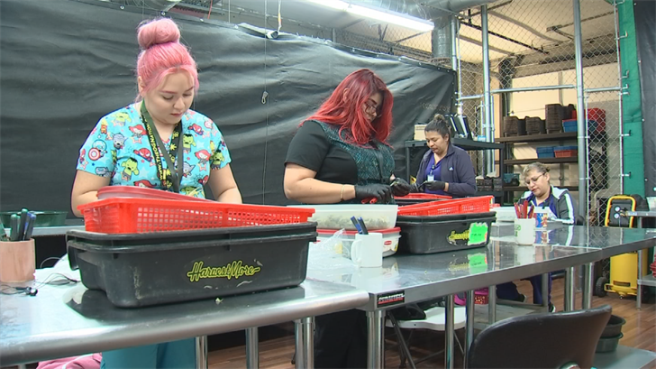There is a room where workers trim the plants to perfection before they are sold to the customer. (Source: 3TV/CBS 5)