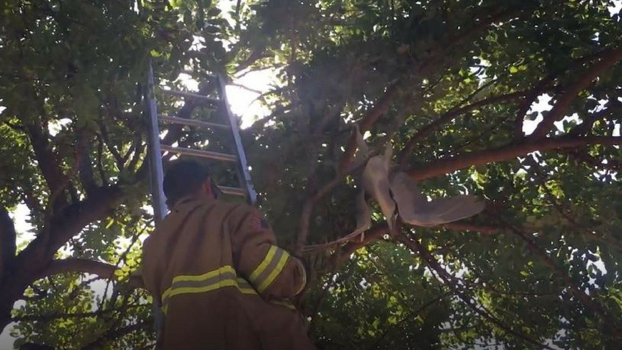 Crews from Peoria Fire and Medical rescued an exotic bird. (Source: Peoria Fire and Medical Dept.)