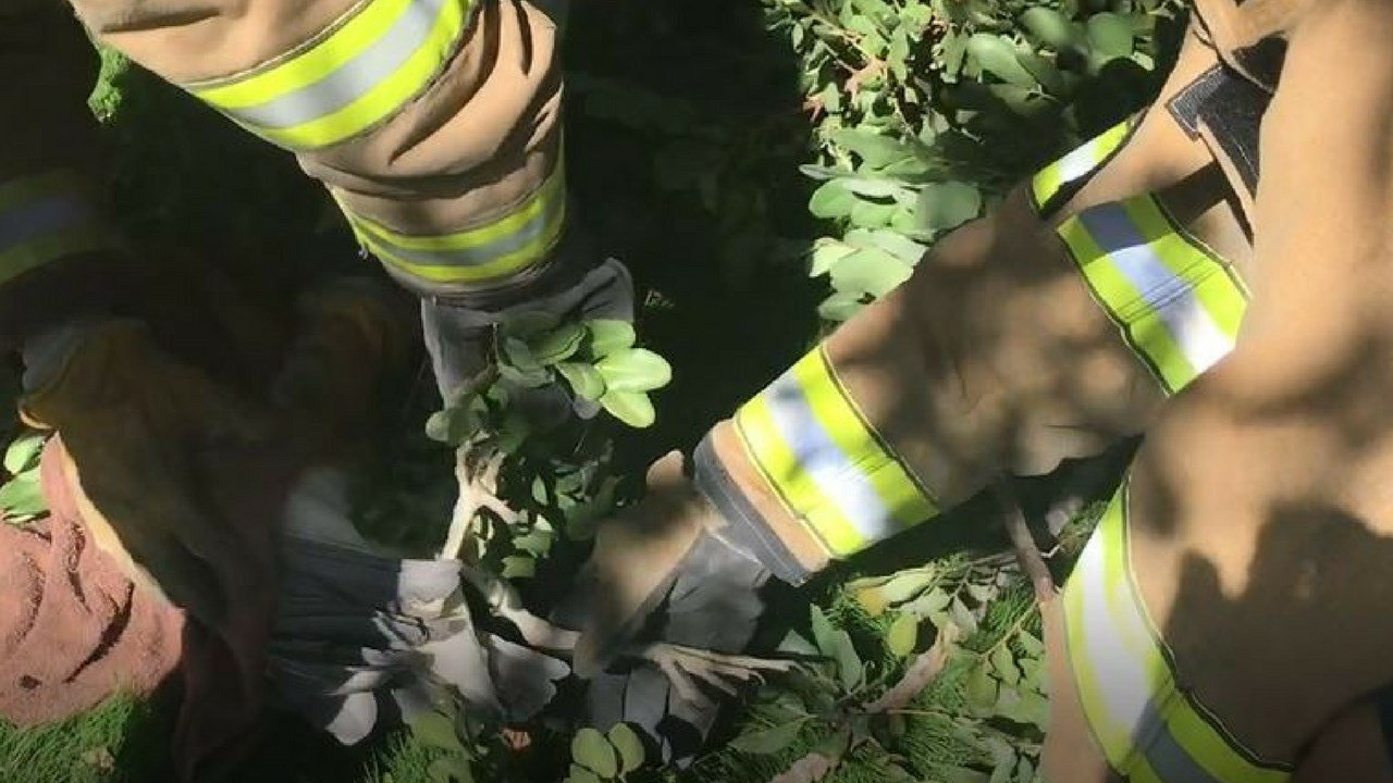 Firefighters removed fishing line from the birds leg. (Source: Peoria Fire and Medical Dept.)