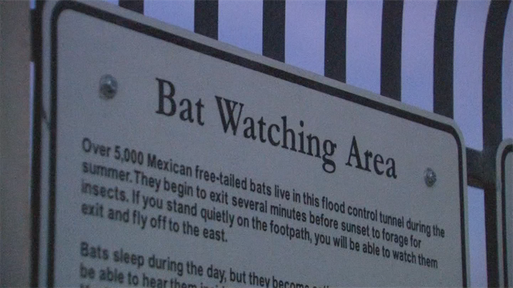 The disease isn't harmful to humans, but it can wipe out entire bat populations. (Source: 3TV/CBS 5)
