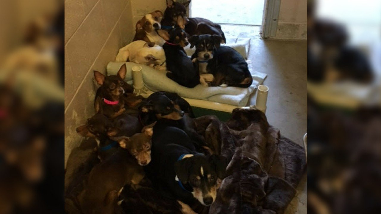 (Source: Pinal County Animal Care and Control)