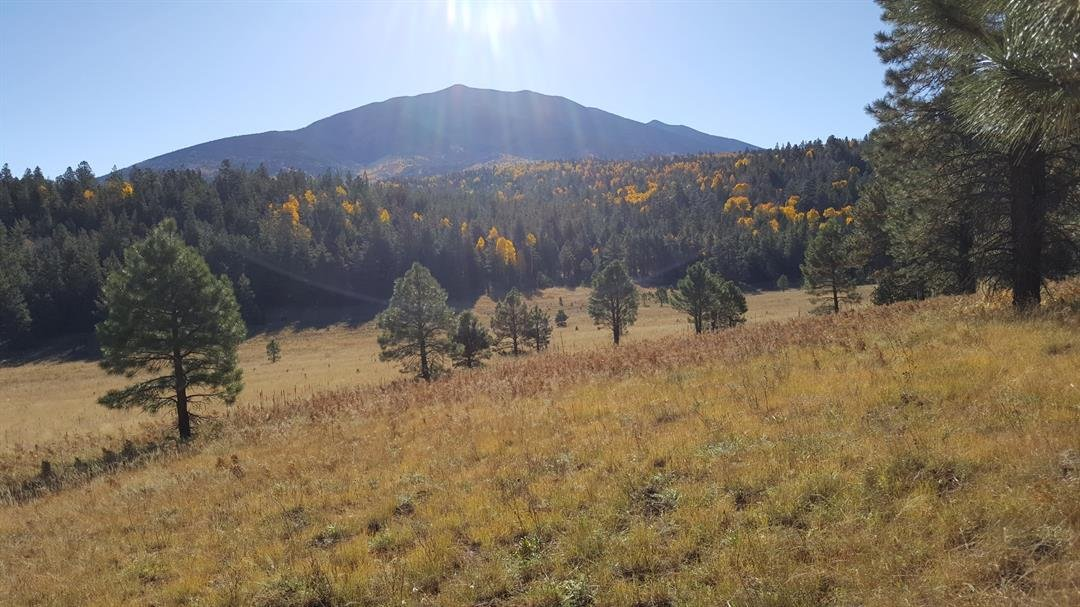 (Source: U.S. Forest Service Coconino National Forest)