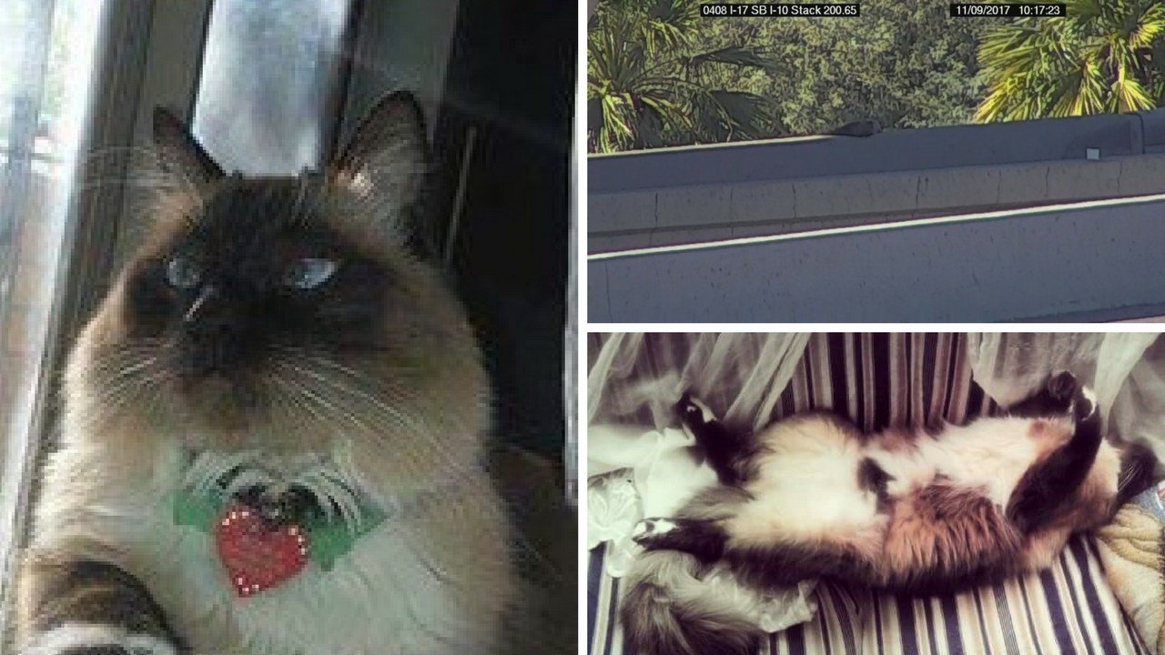 Trouble the cat caused trouble when he lounged on the freeway ledge Thursday Nov. 9, 2017. (Source: Angelica Arredondo/Arizona Department of Transportation)