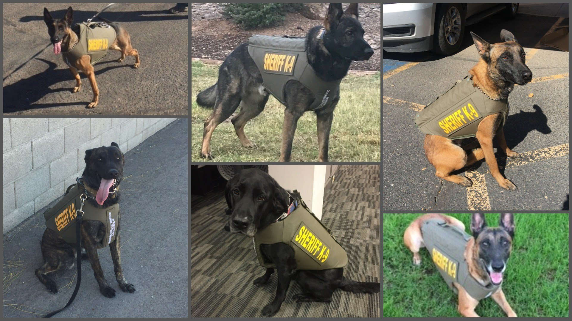 Six MCSO K-9 just received body armor designed just for them. Top: Osa, Bach and Karl. Bottom: Ryker, Bull and Hero (Source: Maricopa County Sheriff's Office)
