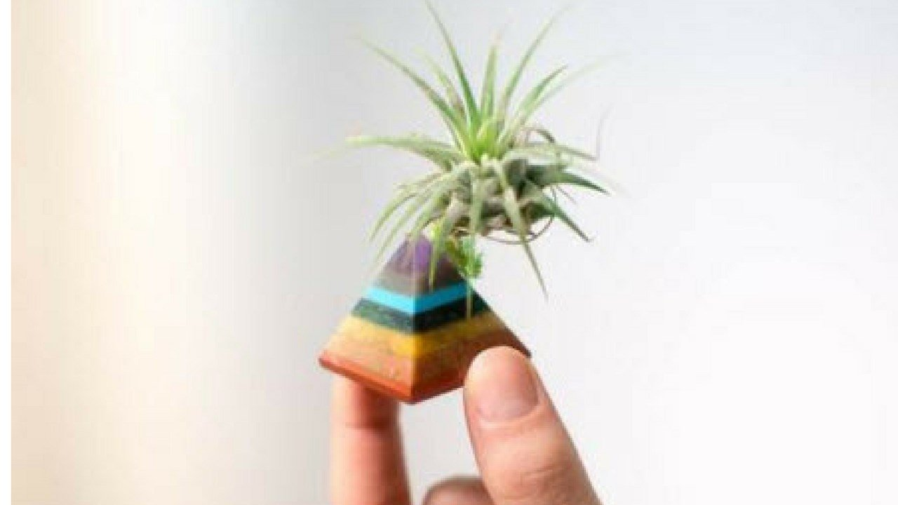 (Source: Lucky Air Plant)