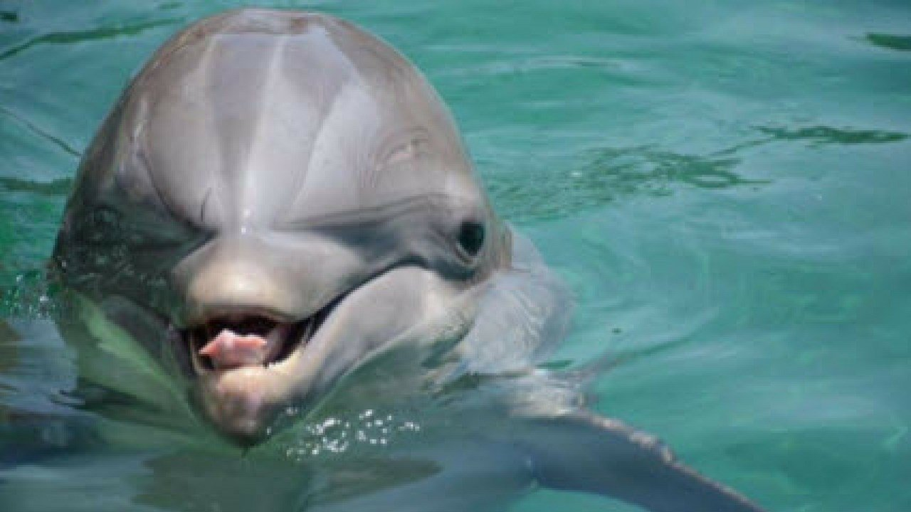Bodie the dolphin died on September 23. (Source: Dolphinaris)