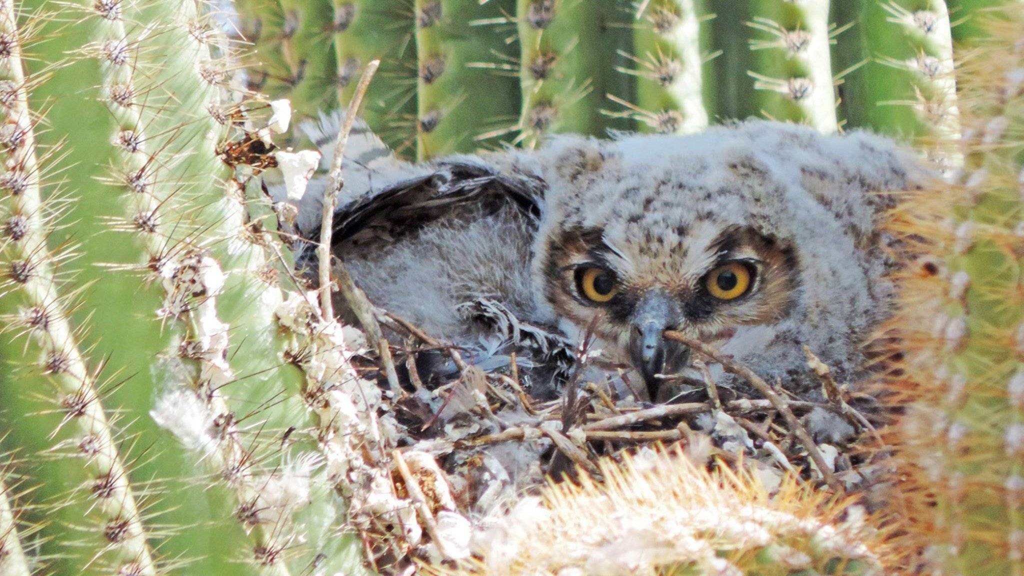 (Source: Facebook/ Saguaro National Park)