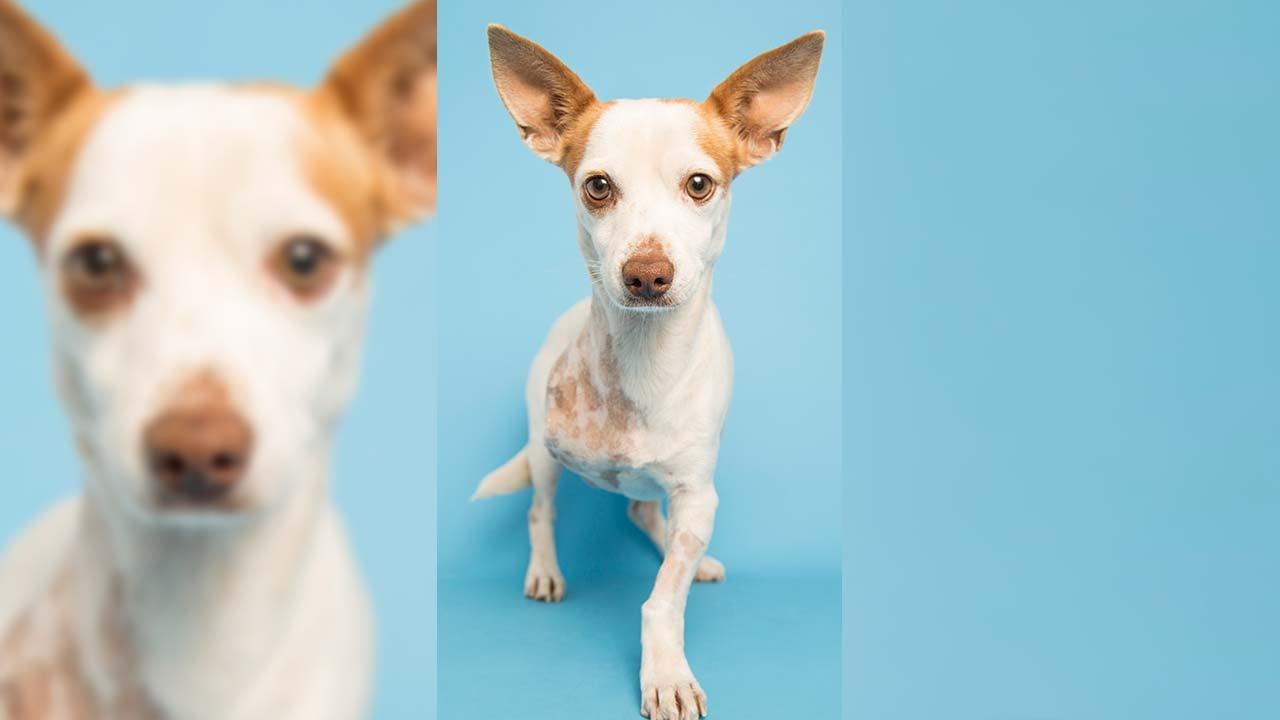 Romeo (Source: Arizona Humane Society)