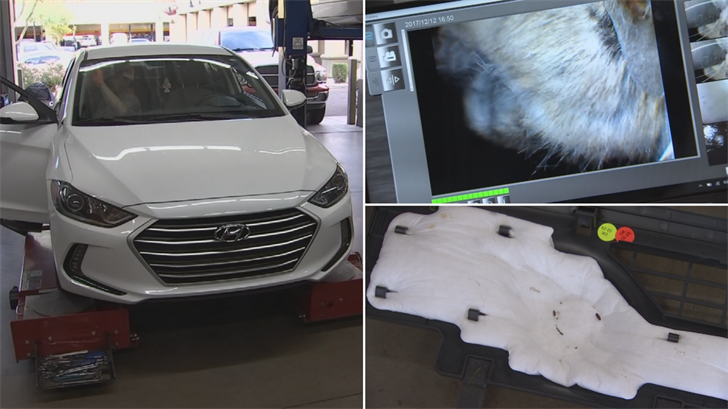 A dead mouse and maggots were found in a Gilbert woman's car. (Source: 3TV/CBS 5)