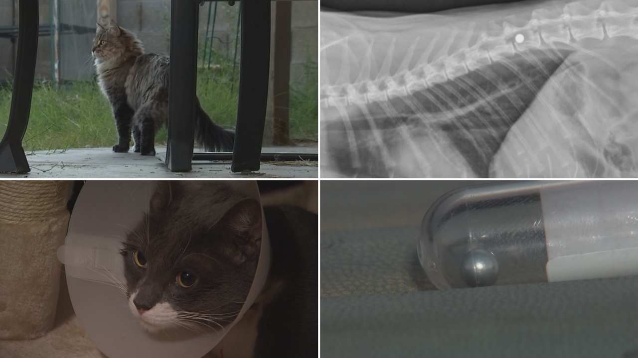 2 cats have been shot with a BB gun in south Phoenix. (Source: 3TV/CBS 5)
