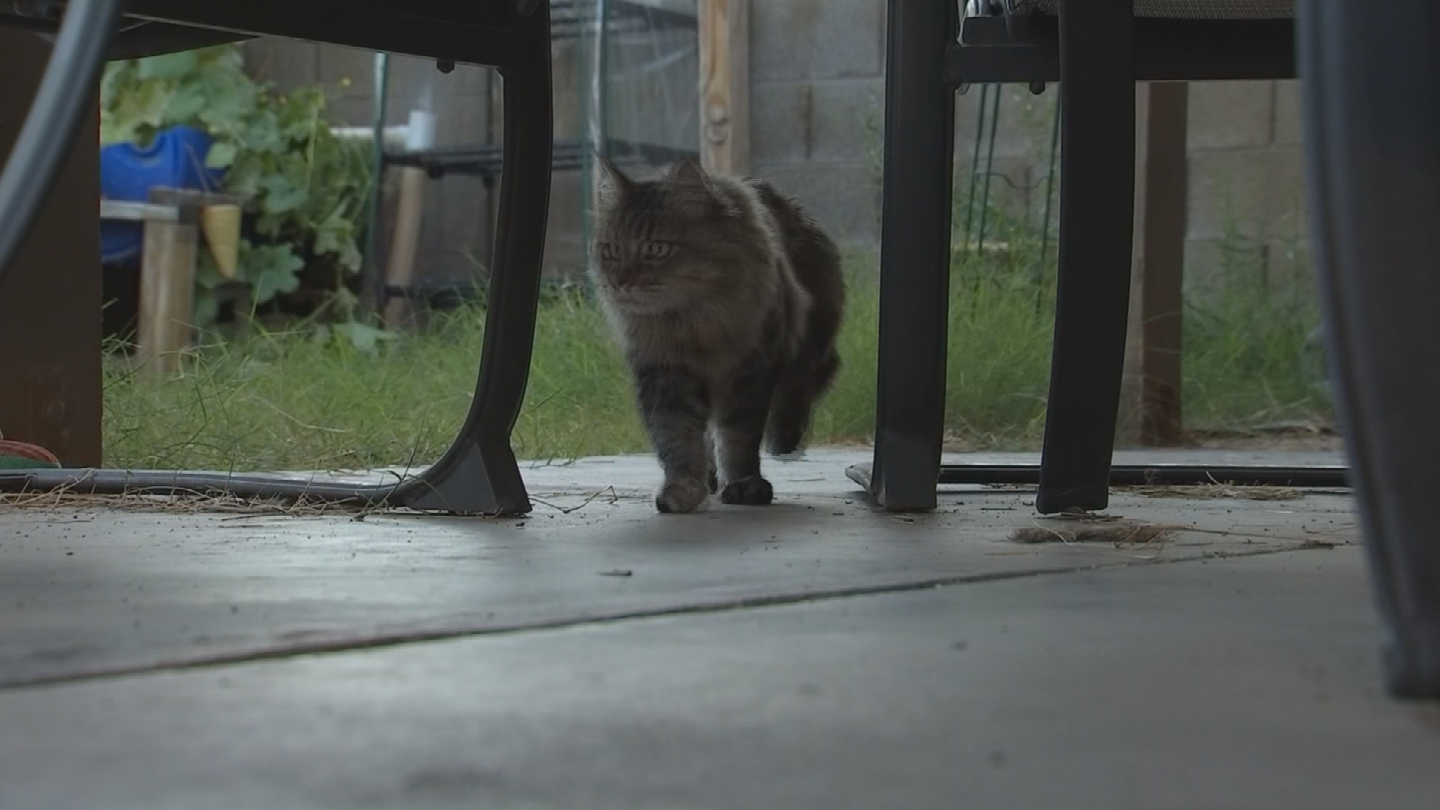 The cat couldn't walk for months and it cost Crenshaw thousands of dollars in medical care. (Source: 3TV/CBS 5)