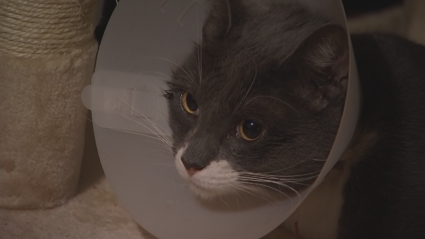 Liza Fritz says her cat came home with blood dripping from its leg. (Source: 3TV/CBS 5)