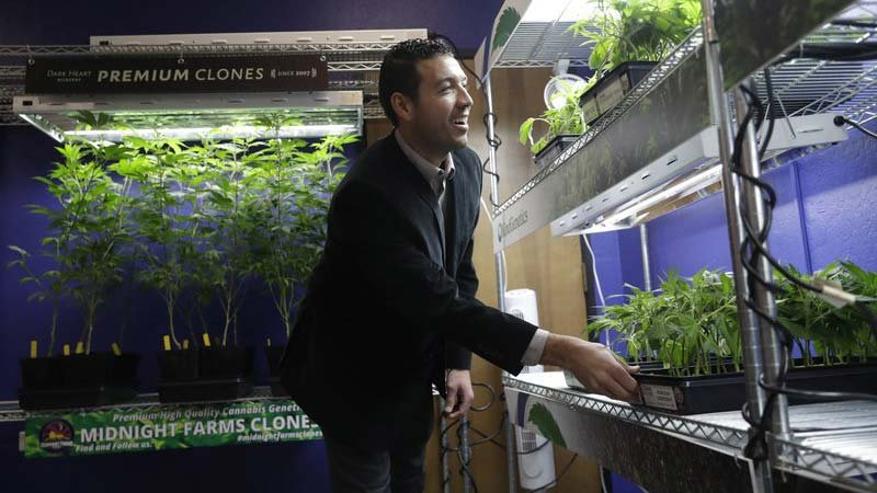 In this Dec. 29, 2017, photo, Khalil Moutawakkil, co-founder and CEO of KindPeoples, a marijuana dispensary, looks at different marijuana plants on display in his store in Santa Cruz, Calif. (Source: AP Photo/Marcio Jose Sanchez)