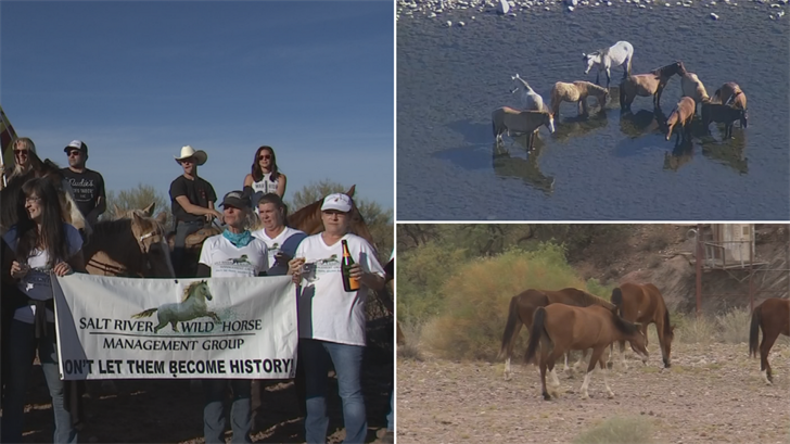 The Salt River wild horses are officially protected. (Source: 3TV/CBS 5)