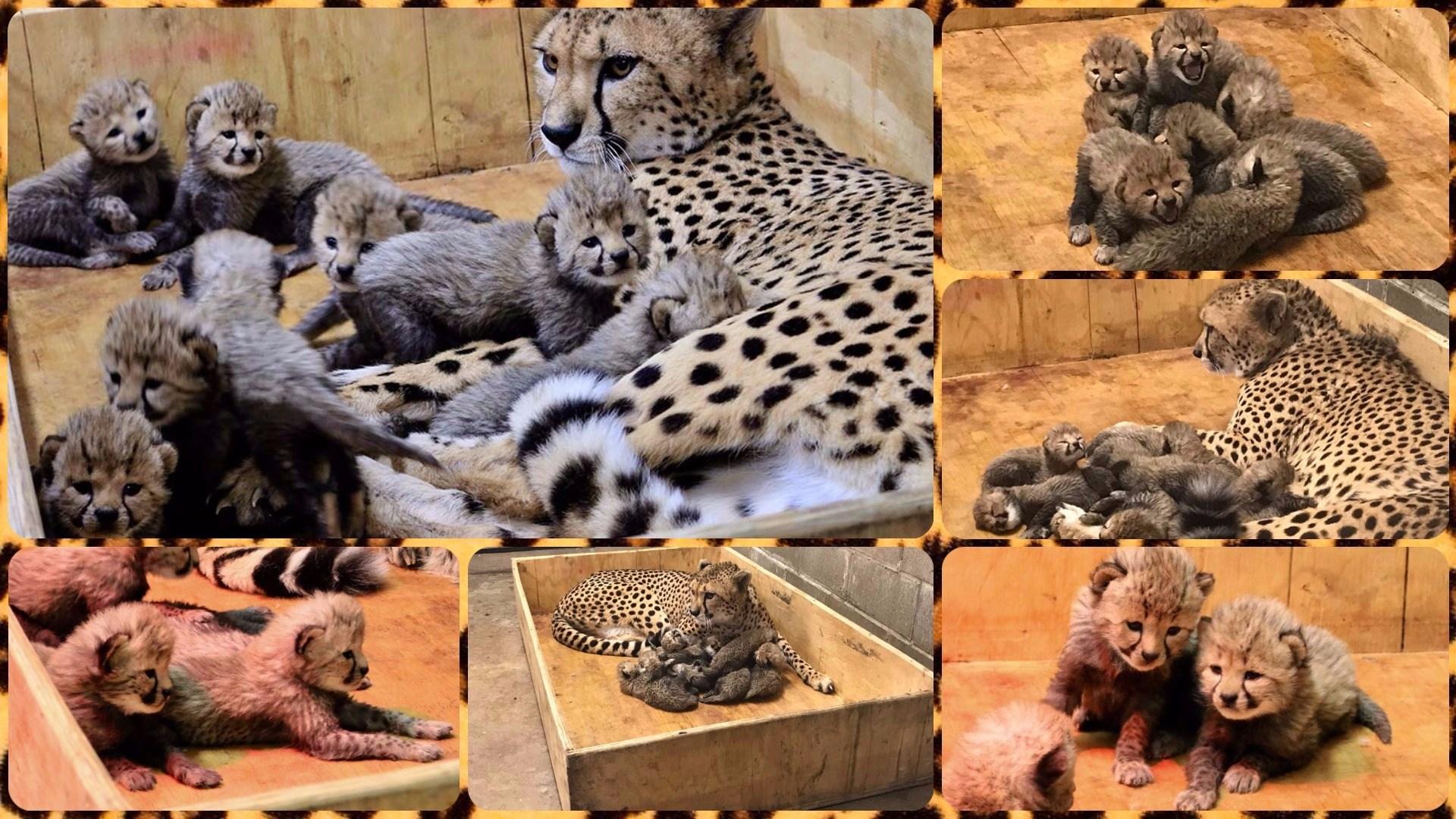 (Source: St. Louis Zoo)